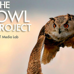 Owl Project - MIT Media Lab